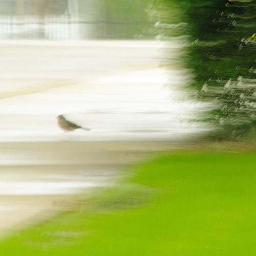 bird on sidewalk