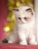 قطتي احلي قطة بالعالم نياااااااااااااو  5733741807_fd0dcd4b63_t