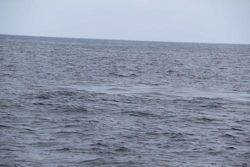 blue whale footprint
