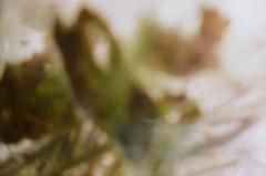 Aquarium - Undine - Aktion: Glas Wasser Wrfel ~ Glass Cube Water - im Wasser Spiegel - in the Mirror (hedbavny) Tags: vienna wien reflection art film water glass analog 35mm aquarium austria mirror sterreich lomo lomography wasser underwater spiegel kunst diary pflanze note diana cube mementomori analogue rotten transition decomposition blatt spiegelung tagebuch glas wrfel aktion vanitas unterwasser verfall leafe verwelkt aquaticplant notiz wasserpflanze hydrophyte wasserspiegel bergang aktionismus scheintod transitio dianamini hedbavny ingridhedbavny