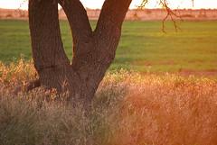 Todo se torna de un mismo color (Franco Rostan | Fotografa) Tags: new light sunset summer sky orange sun color macro reflection verde green art love luz nature argentina colors yellow arbol atardecer photography gris luces photo google nikon day foto photos bokeh top live may dia colores explore amarillo pasto cielo reflejo contraste campo perspectiva 365 geo da naranja nueva nube fotgrafo franco horizonte lapampa brillo day146 fotografa cmara d60 encuadre week21 2011 enfoque nitidez explored nikond60 nitido rostan project365146 load26 francorostan