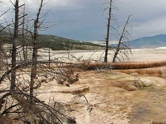 Yellowstone Mammoth Hot Springs [VIDEO] (*Checco*) Tags: park wood travel wild summer sky panorama orange usa cloud mountains hot tree tourism nature colors rock fog america spectacular landscape dead flow outdoors death lava video united unitedstatesofamerica hill terraces scenic dramatic nobody calcium basin erosion national caldera mammoth springs limestone mineral yellowstonenationalpark destination colored yellowstone flowing states wyoming geology wilderness geyser sulfur travertine dramaticsky minerva geothermal lunar landforms hdr steaming eroded mammothhotsprings carbonate geological cooled wildernessarea