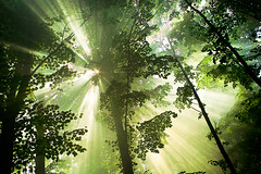 Magic sunbeams (morten almqvist) Tags: trees sun nature sigma treetops foveon sumbeams dp1s