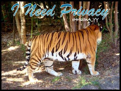 Tiger Presentation: I Need Privacy