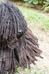 rasta dog, Newtown