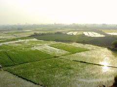(r.a.t.c) Tags: life china green sunshine spring nikon ricefield hainan paddyfield  roamingaboutthechaos ratc