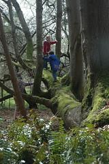 Tree hikers (Rosedale Annie) Tags: tree moss geoffrey hornby