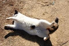 Dirty kitty