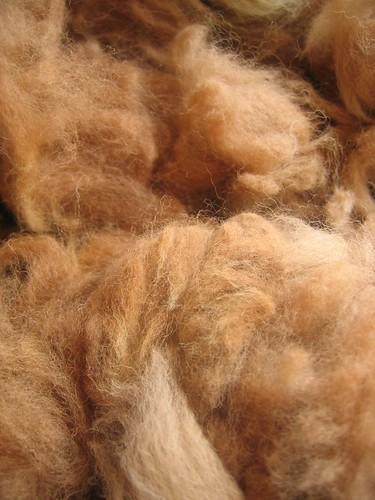 alpaca roving - Cappucino