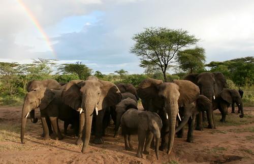 Estás preparado para el viaje a Tanzania