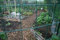 garden in the rain 2