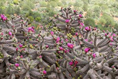 (ONE/MILLION) Tags: travel pink flowers red vacation arizona cactus plants green love nature yellow landscape outdoors spring interesting rocks colorful flickr desert blossoms tags visit views blooms tours find springtime pricks onemillion williestark