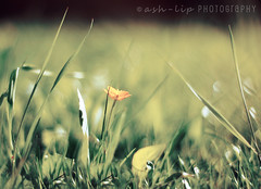 HBW!! :) (~Shilpa) Tags: mywinners visiongroup
