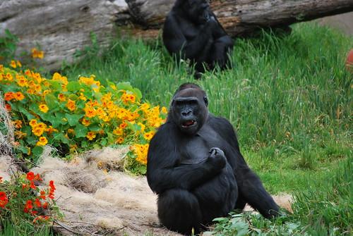 SF Zoo 020