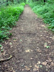 So This Is My Path… (gonisj) Tags: plants woods path
