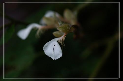PICT8355
