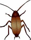 cockroach (3doel82) Tags: fish bird animals insect gambar koleksi ikan belajar burung binatang carnivora serangga mamalia amphibi