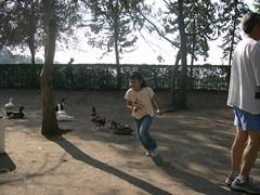 Yuyis correteando patos