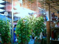 【写真】VQ3007で撮影した吊されたほおずき達