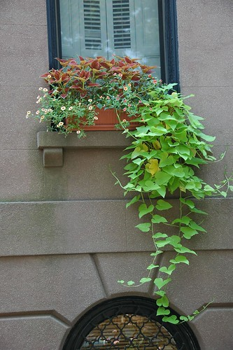 Windowbox, 218 Bergen Street, Boerum Hill, Brooklyn