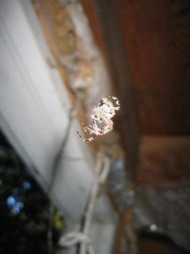 Gravity defying spider