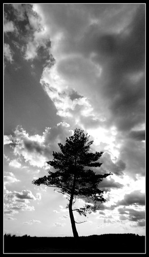 black and white tree photos. Tree in lack and white