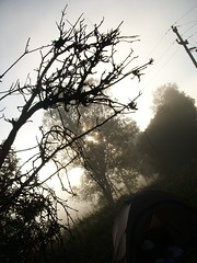 Misty meadow near Lacul Dracului