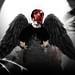 Lee - Fallen Angel