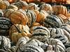 Pumpkin abundance