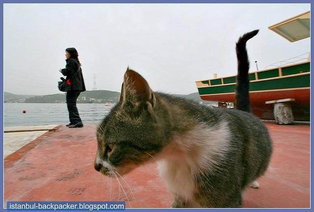 Curious Cat at Istanbul Kavak Pier