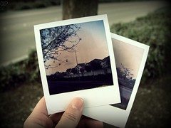 Memories (Prita Priscilla) Tags: park street tree digital outside holding hand photos memories photographs polaroids 600film