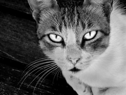 Cat in Black & white