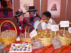 T'ikapapa wins World Challenge 2007