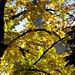 Autumn in Tallinn