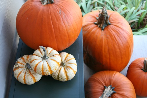 week in the life : pumpkins on the porch by you.