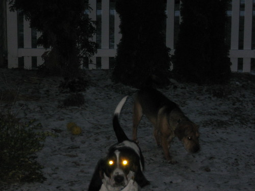 Sandy's glowing eyes