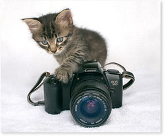 My little assistant...almost a photographer! (Fernando Felix) Tags: portrait pet cats cute face look cat studio lens fur eos poser kitten funny photographer zoom sweet tabby kitty kittens towel gatos whiskers gato button strap tabbies paws graceful gatto gatti claws tomcat gatinho