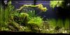 latest aquascape (Stu Worrall Photography) Tags: fish aquarium ada tank aquascape cherryshrimp aquascaping panted rio125 stuworrall ukapsorg rasborahighspot