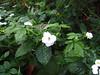 IMG_0141 (Muralidhar Kini) Tags: madikeri tadiandamol