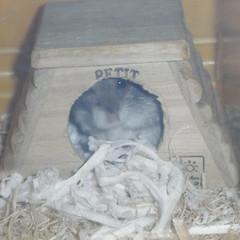 巣箱の中のコー太