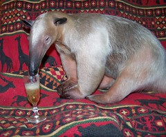 Happy New Year: Anteater tongue