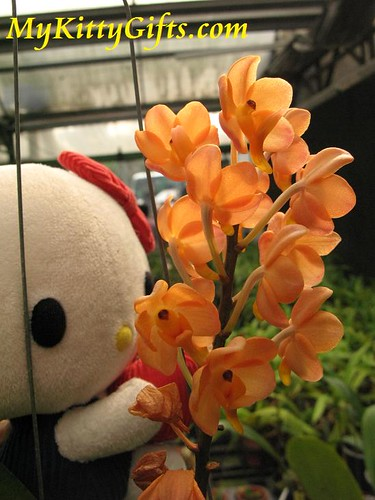 Hello Kitty Watching Orange Orchids in Orchid Trip Hong Kong