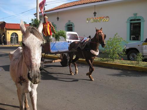 León, Nicaragua - sad abused horse (ashabot) Tags: horses abandoned animals animalrights compassion nicaragua centralamerica animalethics leonnicaragua