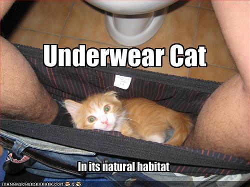 underwear cat
