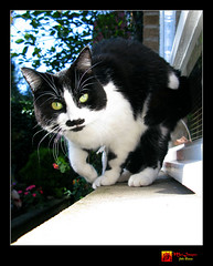 Livin' life on the edge... (moi_images) Tags: animal cat october picaday rudi 2008 livinlifeontheedge moiimages