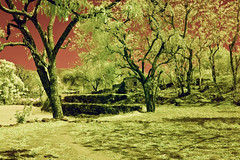 Rural Scene With Ruins In Rajasthan No.2 (aeschylus18917) Tags: trees red sky india tree landscape ir nikon ruins scenery d70 nikond70 farm surreal infrared nikkor infra 1870mm rajasthan f3545g 1870  1870f3545g  nikkor1870f3545g danielruyle aeschylus18917 danruyle druyle   1870mmf3545gifdx nikkor1870f3545gdx