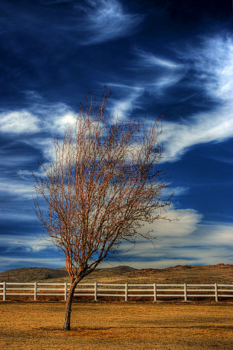Tree, fence, clouds by suckaface.
