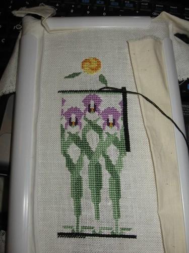 Iris Window Garden - 1/28/09