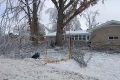 Back yard after (laurienrick) Tags: ice nature icestorm damage arkansas naturaldisaster springdale january2009 icestorm2009