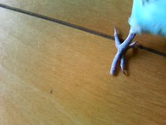 2006/3/11  (NATSUMIIIIIIIIII) Tags: kotori